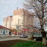 Фото 6 от 02.05.17 ЖК на Ленинградской 81 Анапа